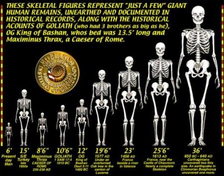 neph skeleton graphic